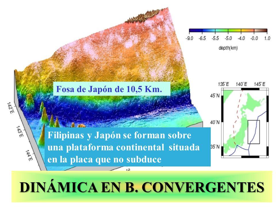 Fosa de Japón de 10,5 Km. DINÁMICA EN B. CONVERGENTES Filipinas y Japón se forman sobre una plataforma continental situada en la placa que no subduce