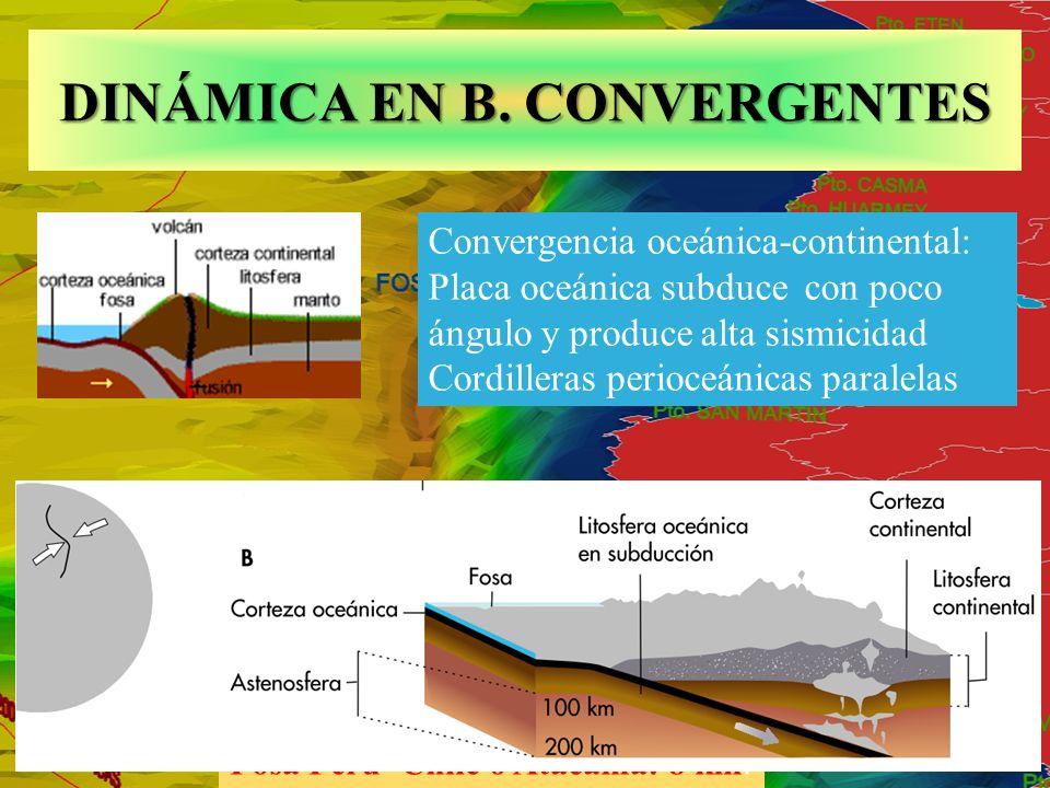 Fosa Perú- Chile o Atacama: 8 km. DINÁMICA EN B. CONVERGENTES Convergencia oceánica-continental: Placa oceánica subduce con poco ángulo y produce alta