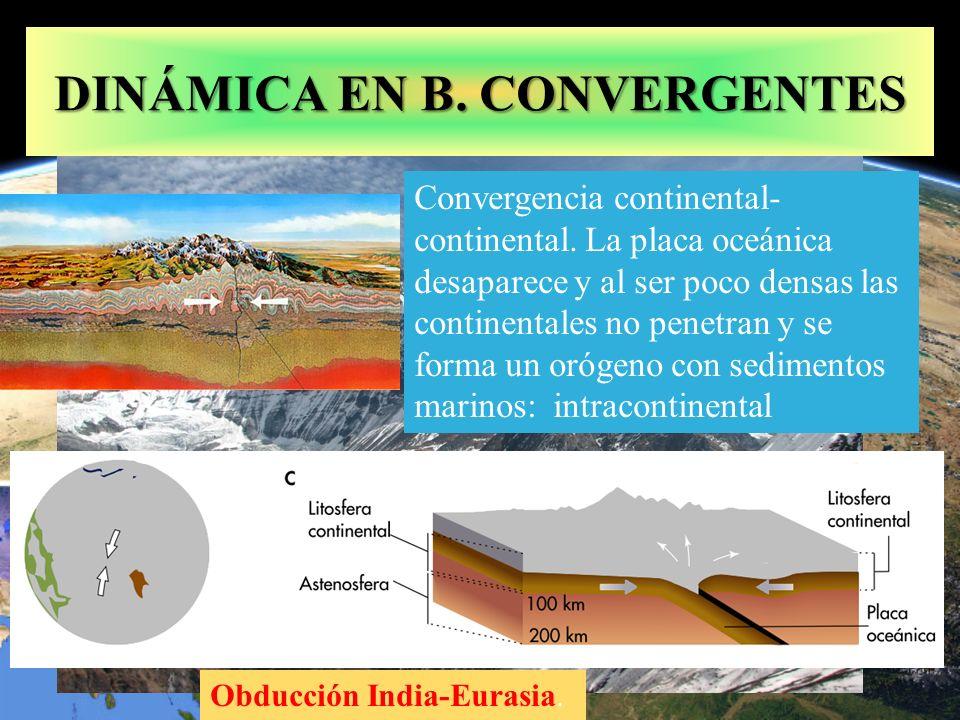 Obducción India-Eurasia. DINÁMICA EN B. CONVERGENTES Convergencia continental- continental. La placa oceánica desaparece y al ser poco densas las cont
