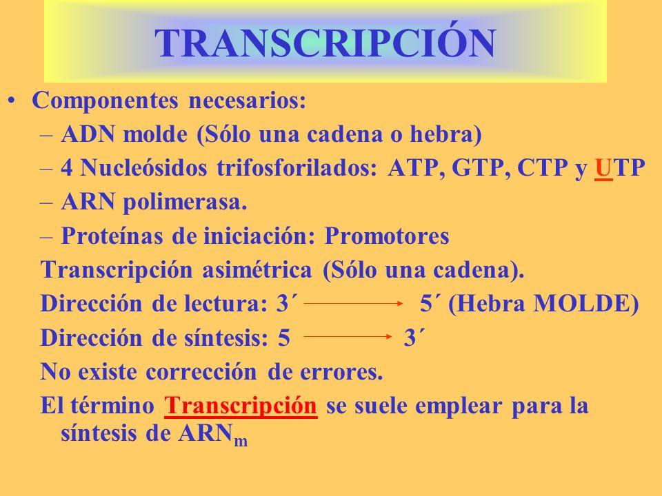 TRANSCRIPCIÓN Componentes necesarios: –ADN molde (Sólo una cadena o hebra) –4 Nucleósidos trifosforilados: ATP, GTP, CTP y UTP –ARN polimerasa. –Prote