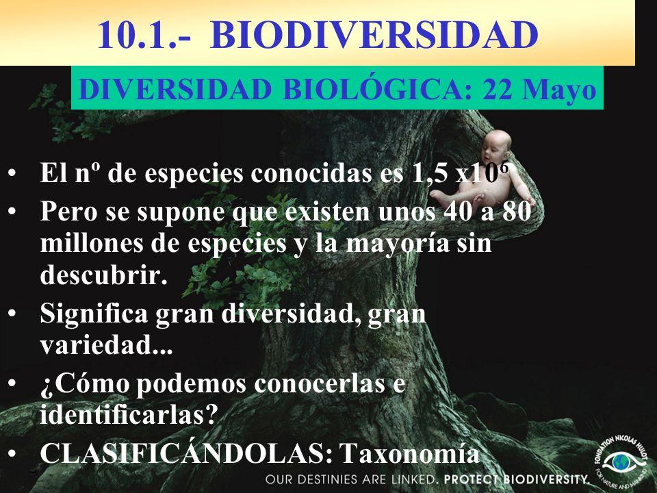 10.1.- BIODIVERSIDAD El nº de especies conocidas es 1,5 x10 6 Pero se supone que existen unos 40 a 80 millones de especies y la mayoría sin descubrir.