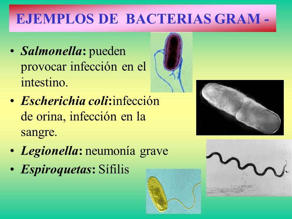 Salmonella: pueden provocar infección en el intestino. Escherichia coli:infección de orina, infección en la sangre. Legionella: neumonía grave Espiroq