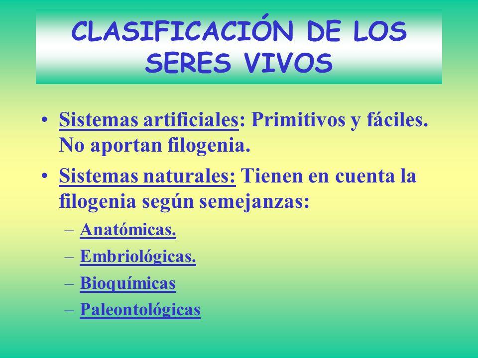CLASIFICACIÓN DE LOS SERES VIVOS Sistemas artificiales: Primitivos y fáciles. No aportan filogenia. Sistemas naturales: Tienen en cuenta la filogenia