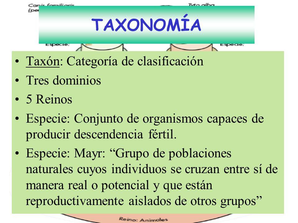 TAXONOMÍA Taxón: Categoría de clasificación Tres dominios 5 Reinos Especie: Conjunto de organismos capaces de producir descendencia fértil. Especie: M