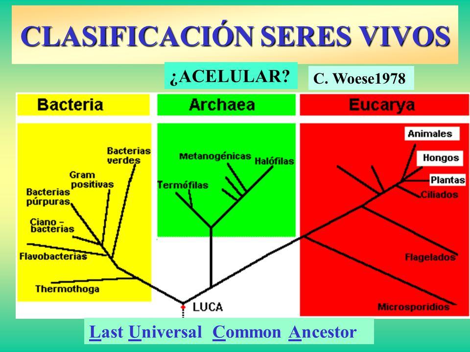 CLASIFICACIÓN SERES VIVOS Last Universal Common Ancestor ¿ACELULAR? C. Woese1978
