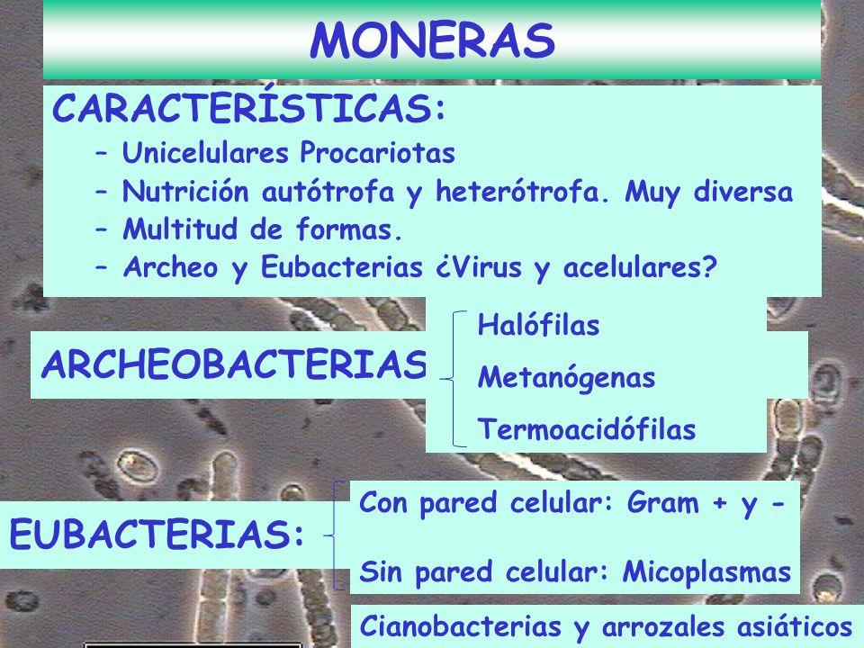 CARACTERÍSTICAS: –Unicelulares Procariotas –Nutrición autótrofa y heterótrofa. Muy diversa –Multitud de formas. –Archeo y Eubacterias ¿Virus y acelula