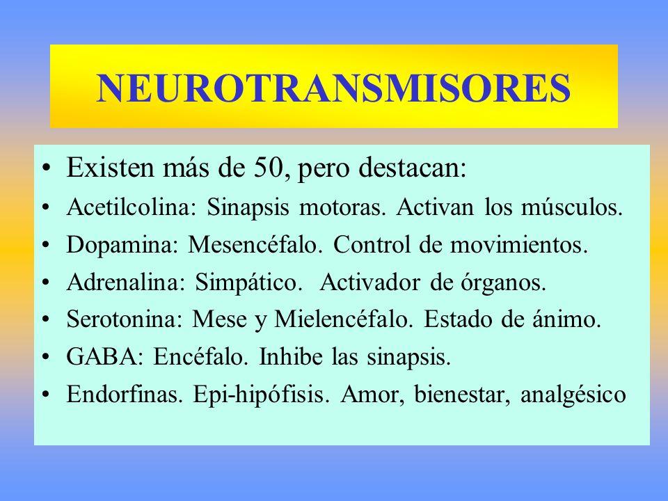 Existen más de 50, pero destacan: Acetilcolina: Sinapsis motoras. Activan los músculos. Dopamina: Mesencéfalo. Control de movimientos. Adrenalina: Sim