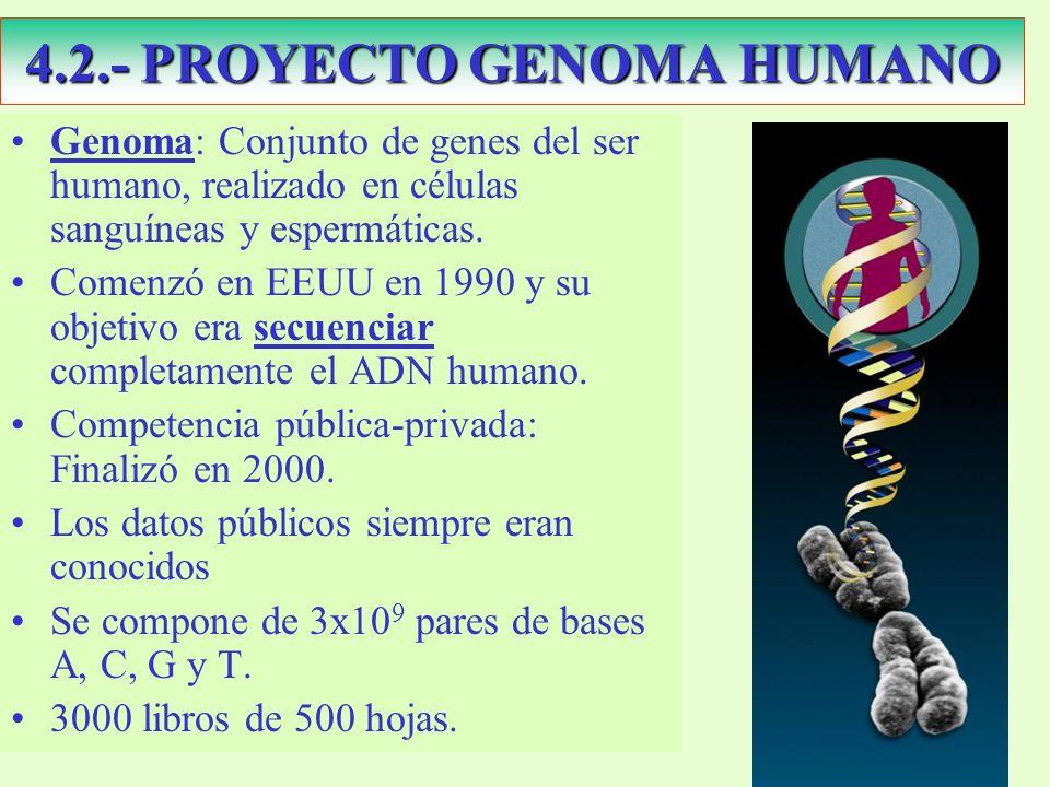 4.2.- PROYECTO GENOMA HUMANO Genoma: Conjunto de genes del ser humano, realizado en células sanguíneas y espermáticas.