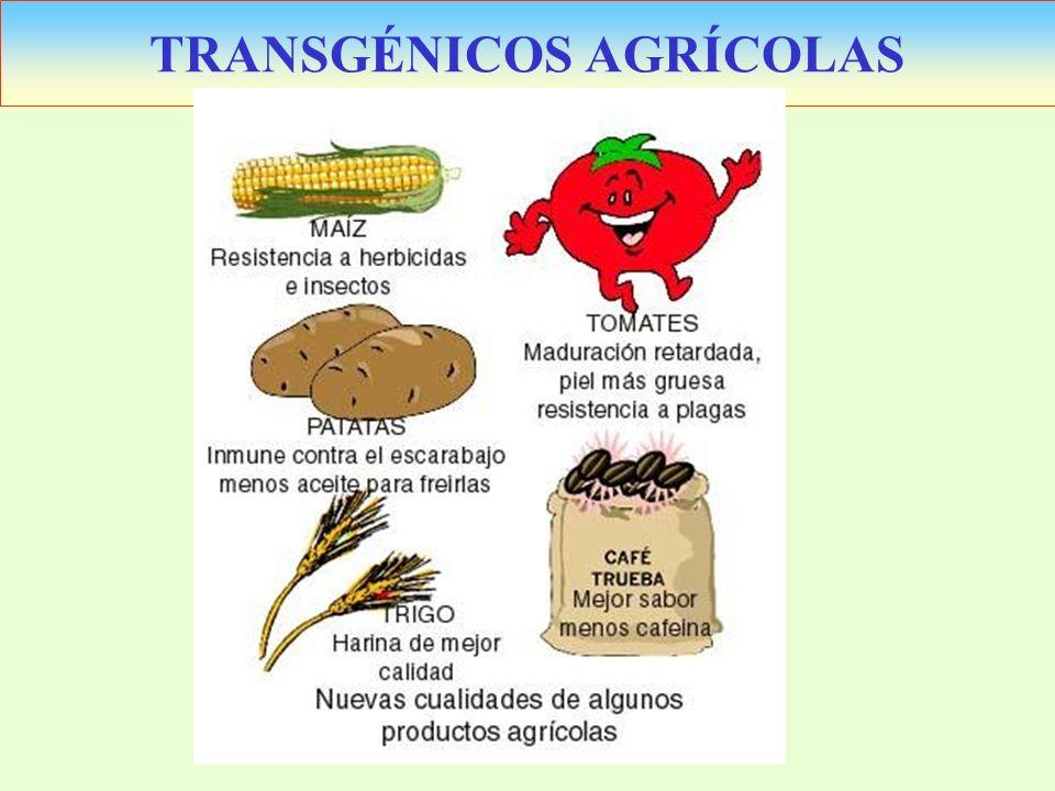TRANSGÉNICOS AGRÍCOLAS