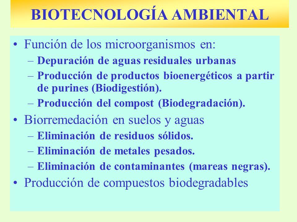 BIOTECNOLOGÍA AMBIENTAL Función de los microorganismos en: –Depuración de aguas residuales urbanas –Producción de productos bioenergéticos a partir de purines (Biodigestión).