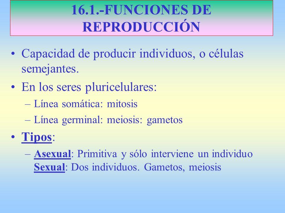 16.2.-TIPOS DE REPRODUCCIÓN ASEXUAL PLURICELULARES : A.- Escisión o Fragmentación: 1.- Longitudinal: Poríferos y Equinodermos 2.- Transversal: Anélidos y PLATELMINTOS B.- Partenogénesis: Óvulo sin fecundar.
