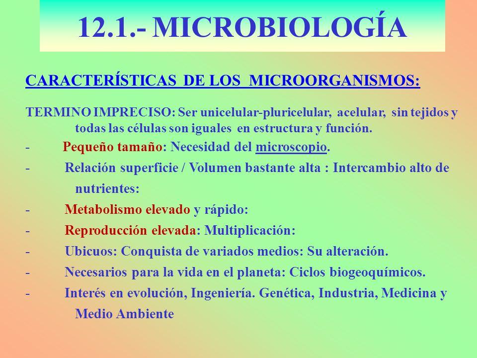 12.1.- MICROBIOLOGÍA CARACTERÍSTICAS DE LOS MICROORGANISMOS: TERMINO IMPRECISO: Ser unicelular-pluricelular, acelular, sin tejidos y todas las células