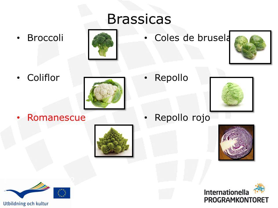 Brassicas Broccoli Coliflor Romanescue Coles de bruselas Repollo Repollo rojo 1 2 3 4 5