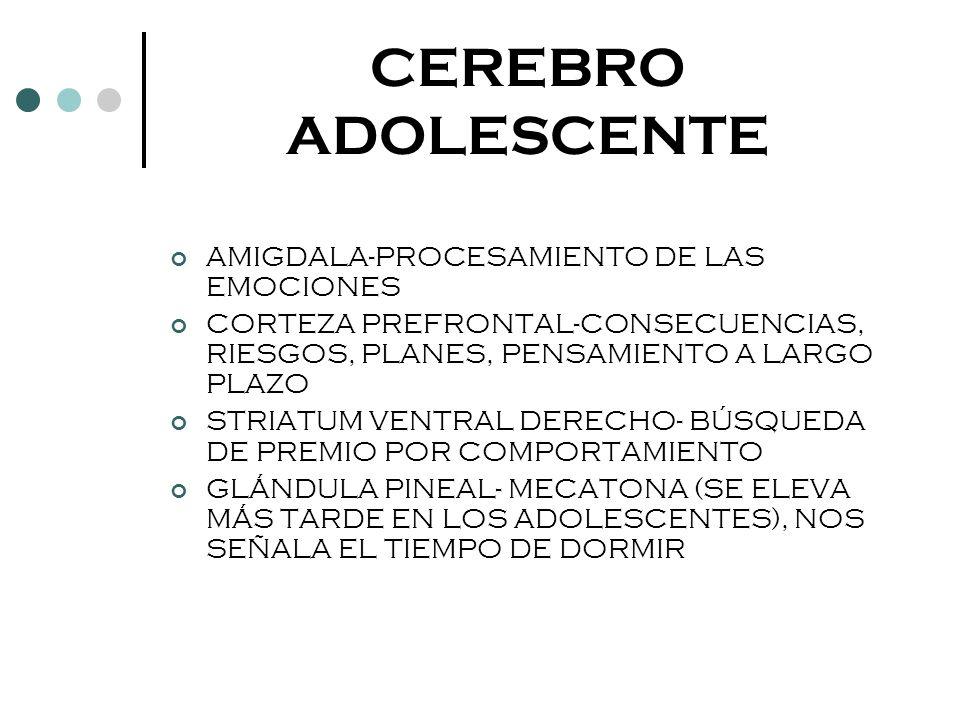 CEREBRO ADOLESCENTE AMIGDALA-PROCESAMIENTO DE LAS EMOCIONES CORTEZA PREFRONTAL-CONSECUENCIAS, RIESGOS, PLANES, PENSAMIENTO A LARGO PLAZO STRIATUM VENT