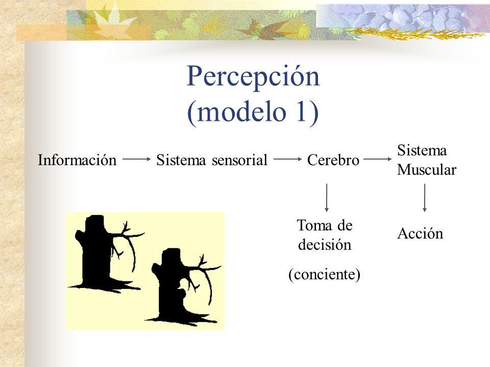 Percepción (modelo 1) InformaciónSistema sensorialCerebro Sistema Muscular Toma de decisión (conciente) Acción