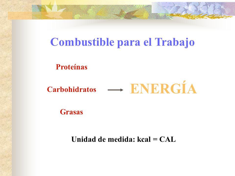 Proteínas Carbohidratos Grasas ENERGÍA Unidad de medida: kcal = CAL Combustible para el Trabajo