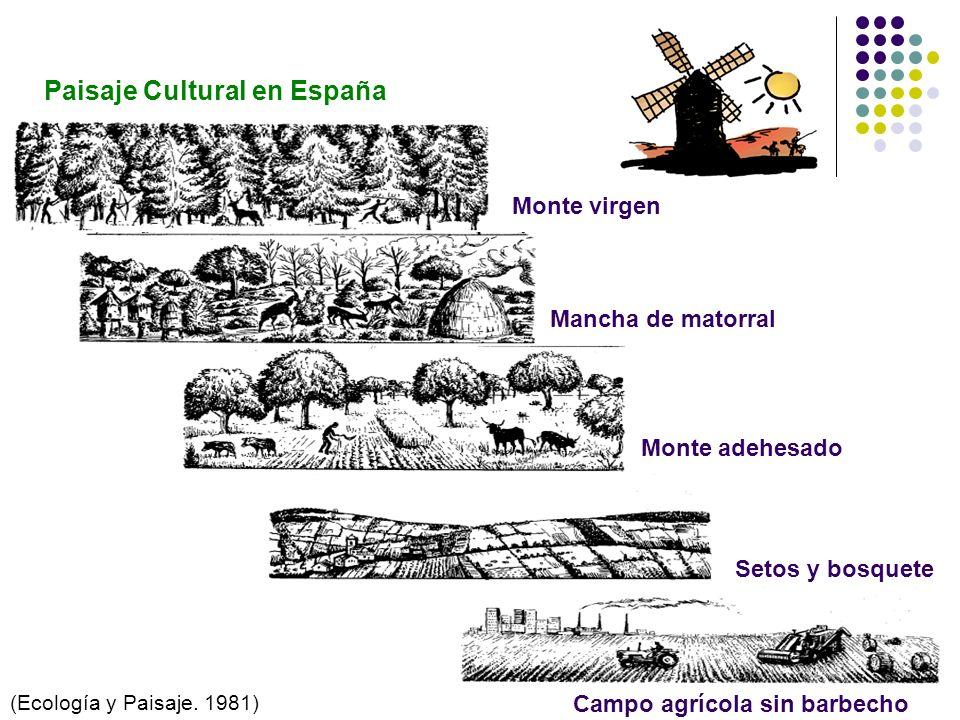 Paisaje Cultural en España Monte virgen Mancha de matorral Monte adehesado Setos y bosquete Campo agrícola sin barbecho (Ecología y Paisaje. 1981)
