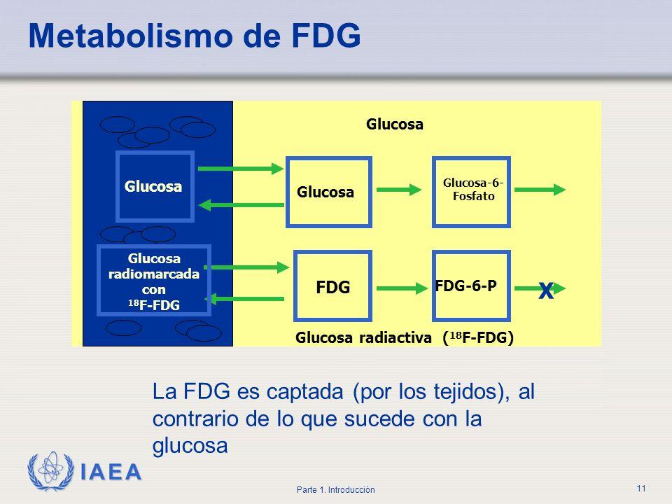 IAEA Parte 1. Introducción 11 Metabolismo de FDG FDG FDG-6-P Glucosa radiomarcada con 18 F-FDG Glucosa radiactiva ( 18 F-FDG) X Glucosa Glucosa-6- Fos