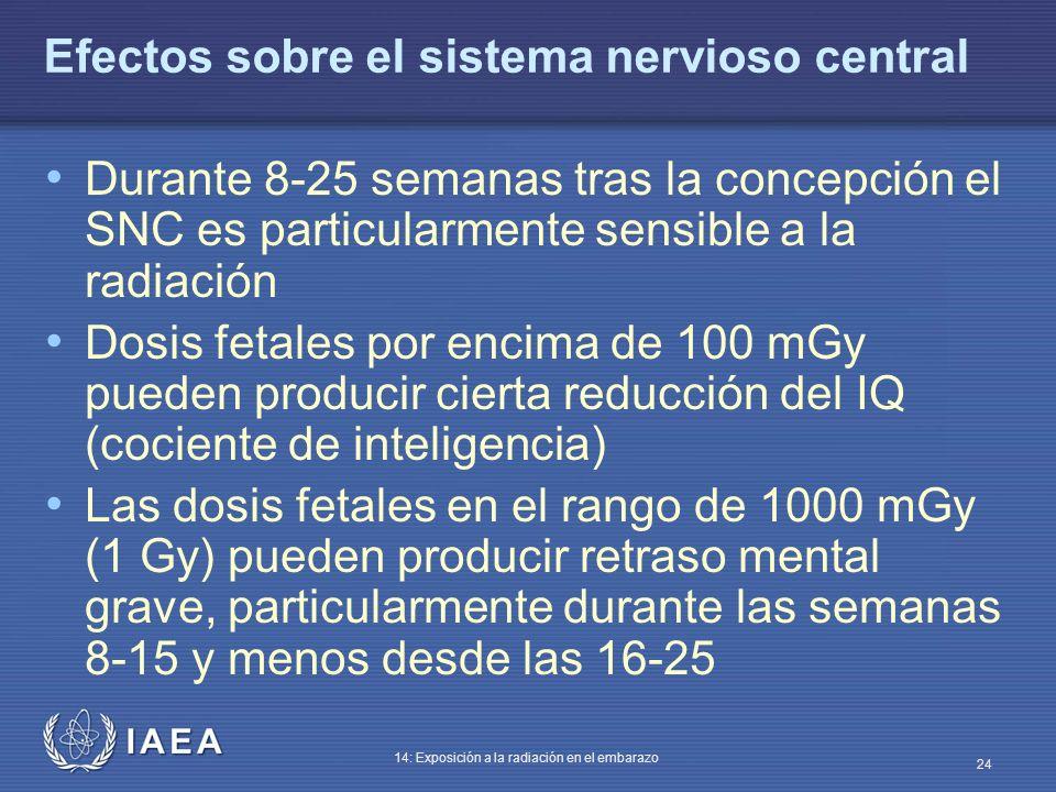 IAEA 14: Exposición a la radiación en el embarazo 24 Efectos sobre el sistema nervioso central Durante 8-25 semanas tras la concepción el SNC es parti