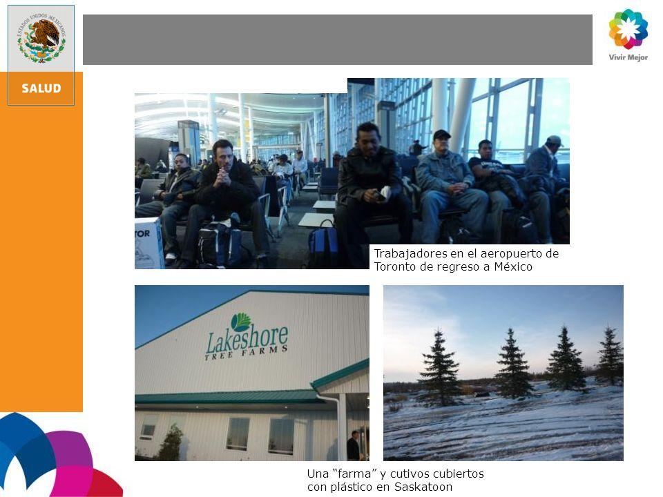 Trabajadores en el aeropuerto de Toronto de regreso a México Una farma y cutivos cubiertos con plástico en Saskatoon