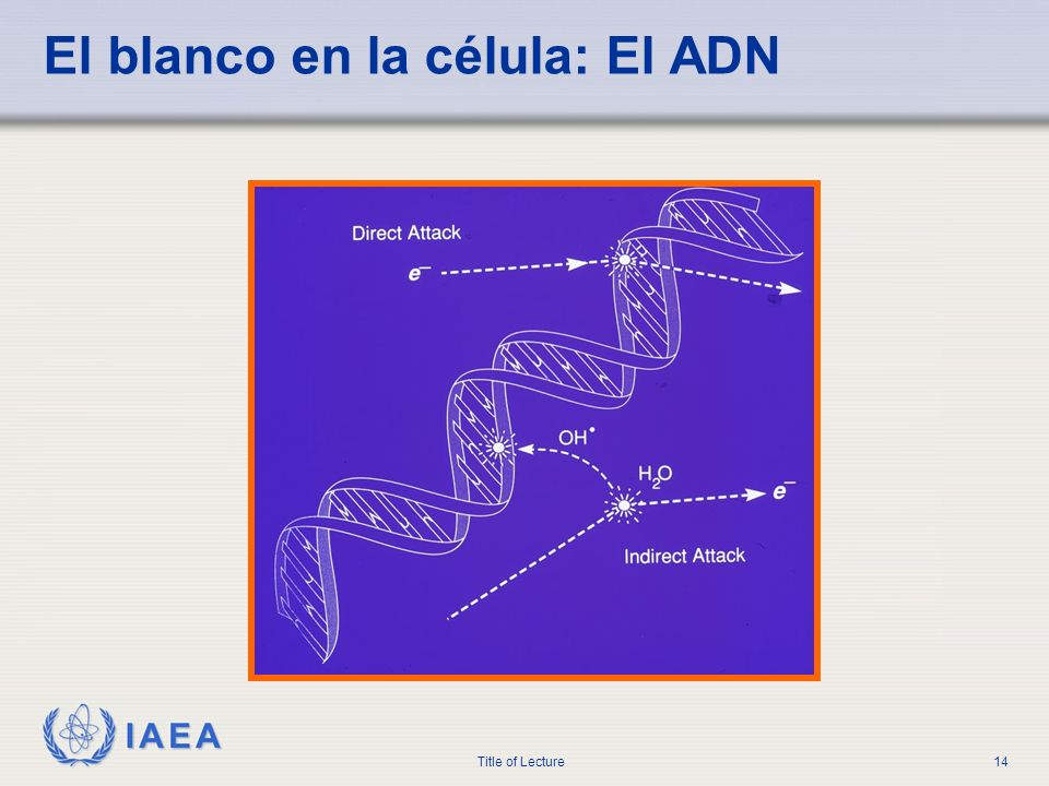 IAEA Title of Lecture14 El blanco en la célula: El ADN