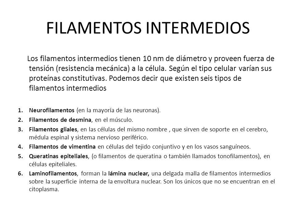 FILAMENTOS INTERMEDIOS Los filamentos intermedios tienen 10 nm de diámetro y proveen fuerza de tensión (resistencia mecánica) a la célula. Según el ti