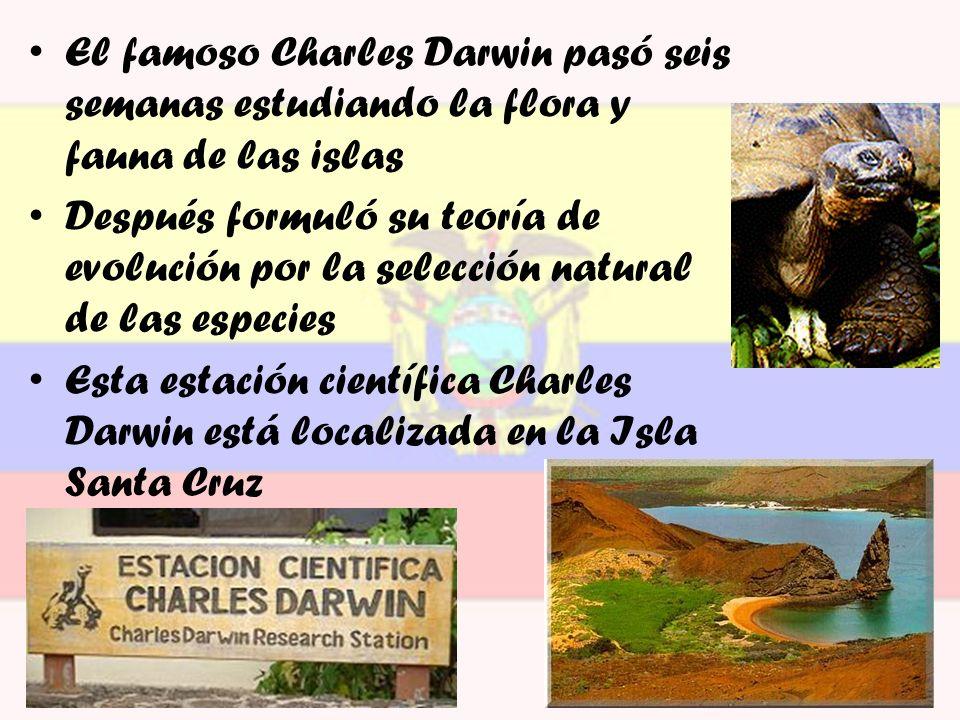 El famoso Charles Darwin pasó seis semanas estudiando la flora y fauna de las islas Después formuló su teoría de evolución por la selección natural de