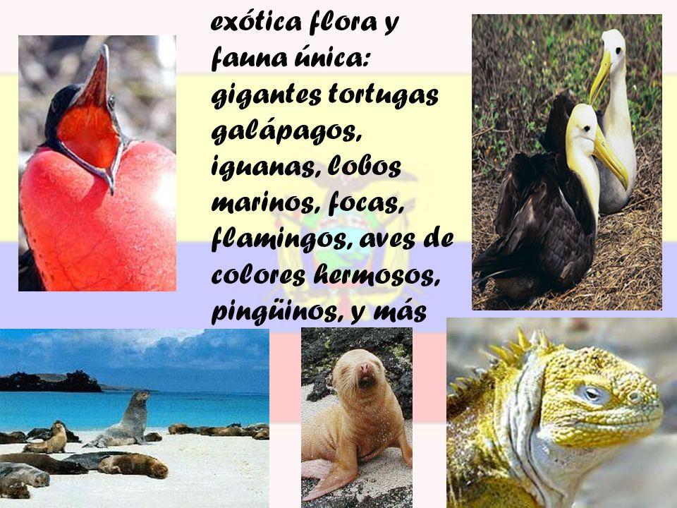 exótica flora y fauna única: gigantes tortugas galápagos, iguanas, lobos marinos, focas, flamingos, aves de colores hermosos, pingüinos, y más