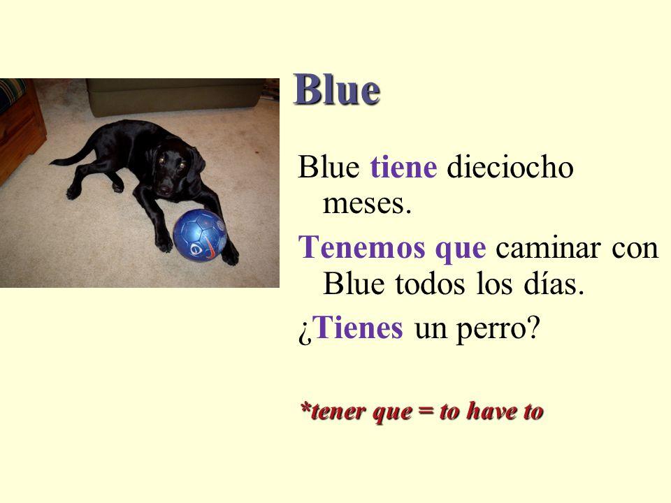 Blue Blue tiene dieciocho meses.Tenemos que caminar con Blue todos los días.