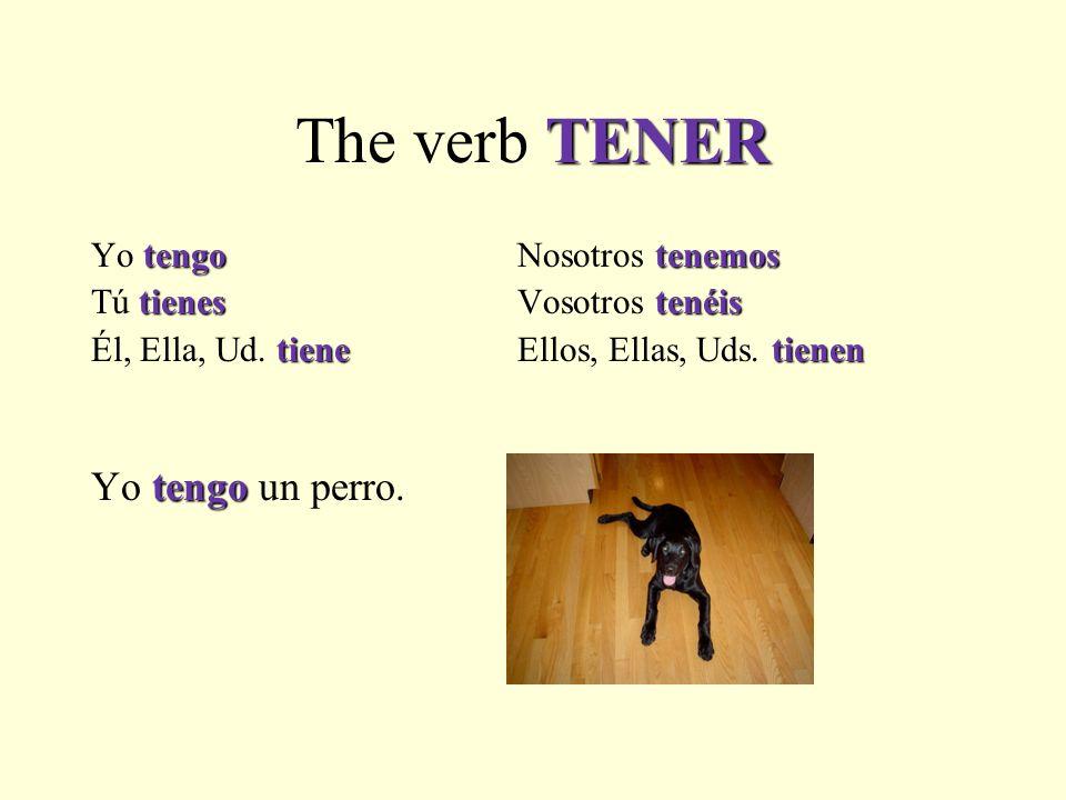 TENER The verb TENER tengotenemos Yo tengoNosotros tenemos tienestenéis Tú tienesVosotros tenéis tienetienen Él, Ella, Ud.