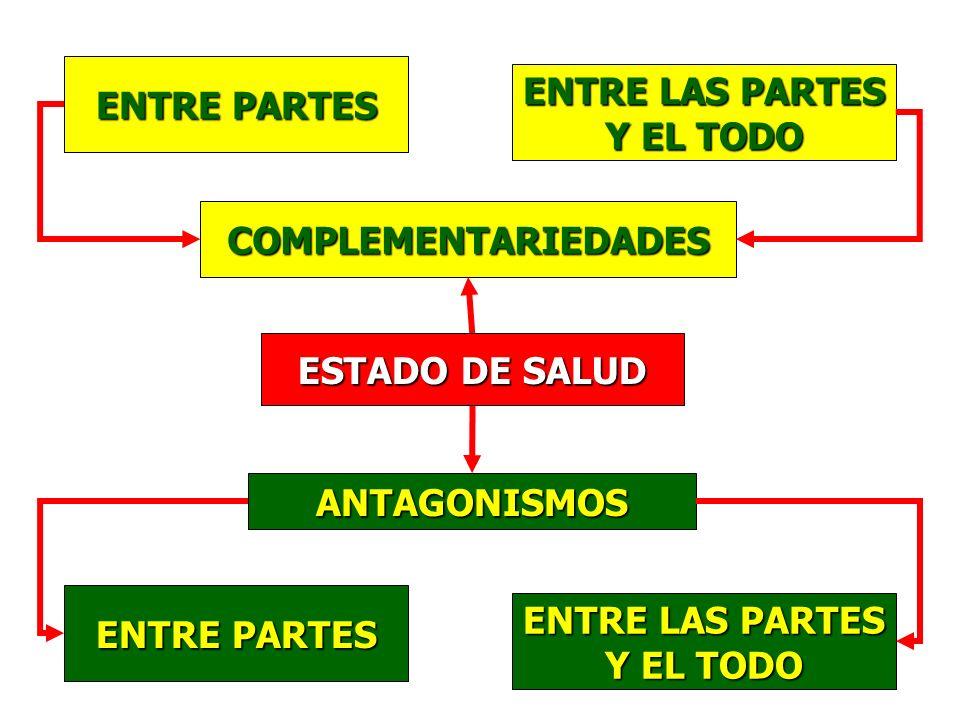 ENTRE PARTES ENTRE LAS PARTES Y EL TODO COMPLEMENTARIEDADES ANTAGONISMOS ENTRE PARTES ENTRE LAS PARTES Y EL TODO ESTADO DE SALUD