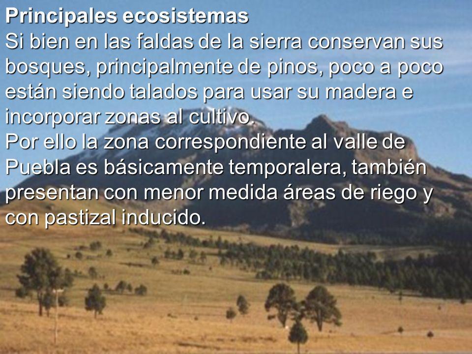 Principales ecosistemas Principales ecosistemas Si bien en las faldas de la sierra conservan sus bosques, principalmente de pinos, poco a poco están s