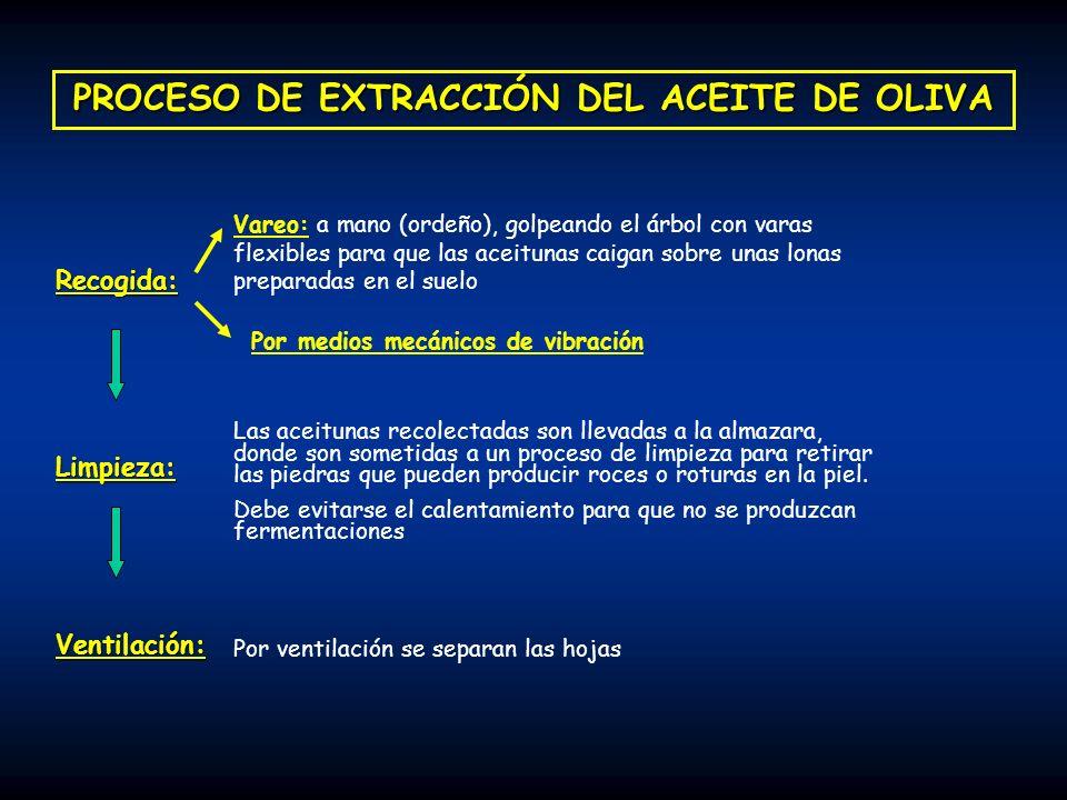 PAPEL DEL AO EN EL PROCESO DE ENVEJECIMIENTO: Daño celular provocado por el envejecimiento natural Ingestión de elevadas cantidades de sustancias antioxidantes (dieta equilibrada y variada) Ingesta limitada de AG poliinsaturados Descalcificación ósea El AO muestra un efecto favorable en la mineralización ósea debido, principalmente a su concentración en Ácido Oleico (efecto dosis-dependiente) La ingesta de ácido oleico debe ir ligada a la de pequeñas cantidades de AG esenciales, lo que se consigue con un consumo adecuado de AO Trastornos vasculares en el cerebro Vasculopatías debidas, principalmente a una disminucion de los niveles de HDL-c AO: se caracteriza, a diferencia de los demás aceites vegetales, porque produce un aumento de los niveles de HDL-c.