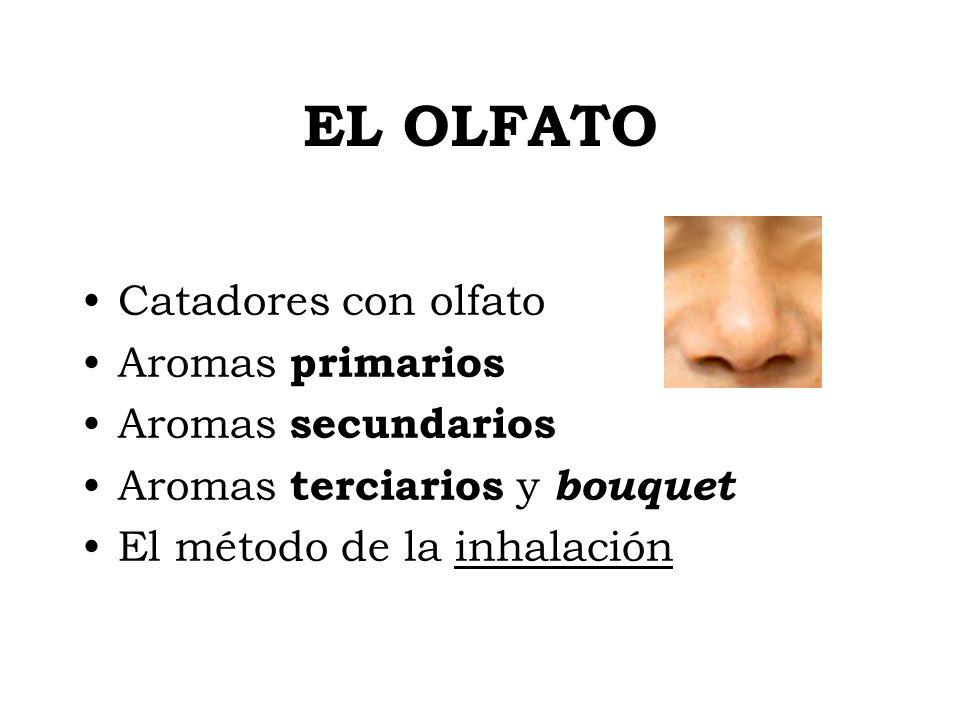 EL OLFATO Catadores con olfato Aromas primarios Aromas secundarios Aromas terciarios y bouquet El método de la inhalación