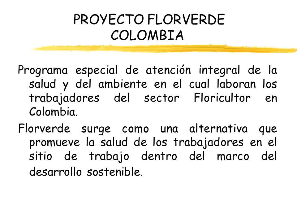 PROYECTO FLORVERDE COLOMBIA Procesos de producción utilizados en esta industria y su relación con la salud ocupacional de los trabajadores: xPropagación xPreparación de suelos xSiembra xLabores culturales xRiego y fertilización xFumigación o postcosecha xEmpaque y Exportación