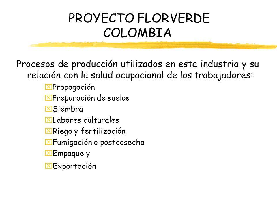 PROYECTO FLORVERDE COLOMBIA Procesos de producción utilizados en esta industria y su relación con la salud ocupacional de los trabajadores: xErgonómico, xPsicosocial, xQuímico, xFísicos (Ruido, Calor, Frío, Iluminación) xTrabajo en alturas Mecánicos y eléctricos