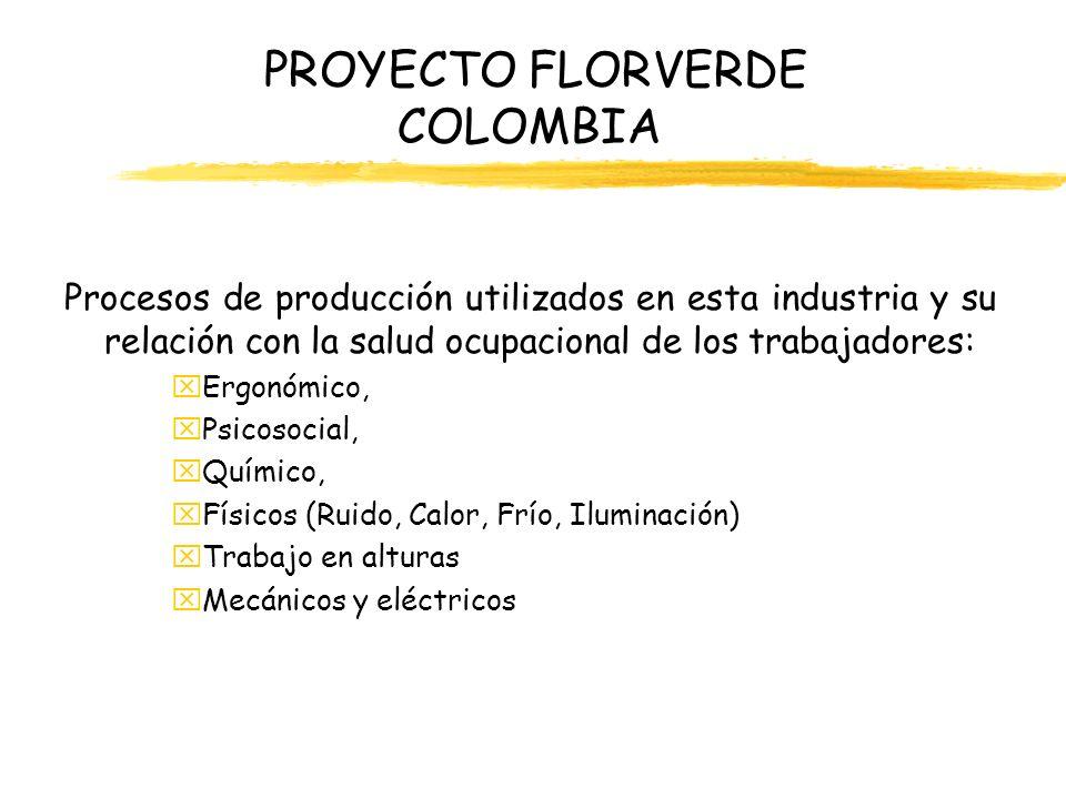 PROYECTO FLORVERDE COLOMBIA Procesos de producción utilizados en esta industria y su relación con la salud ocupacional de los trabajadores: xErgonómic