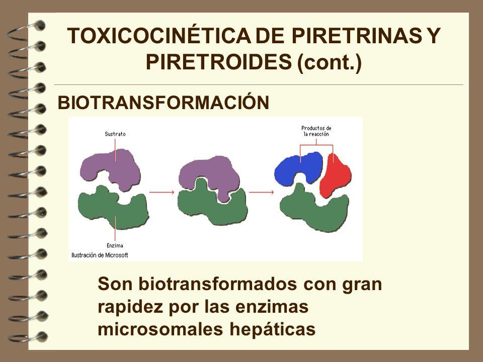 TOXICOCINÉTICA DE PIRETRINAS Y PIRETROIDES (cont.) BIOTRANSFORMACIÓN Son biotransformados con gran rapidez por las enzimas microsomales hepáticas