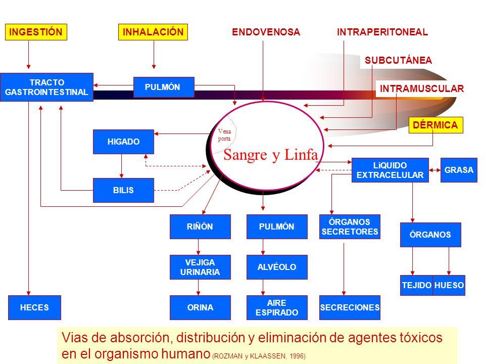 Absorción La absorción implica que la sustancia química atraviesa membranas biológicas Vias –respiratoria –digestiva –dérmica