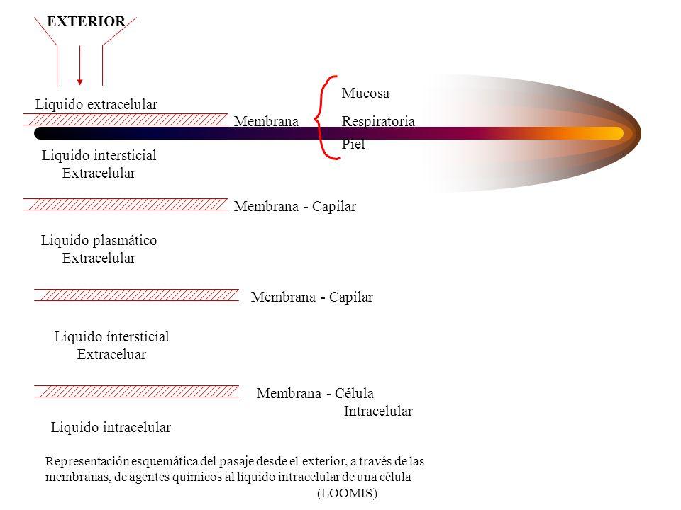 Absorción Pasaje a través de membrana –transporte pasivo gradiente de concentración –transporte activo consumo de energia para el pasaje Las membranas