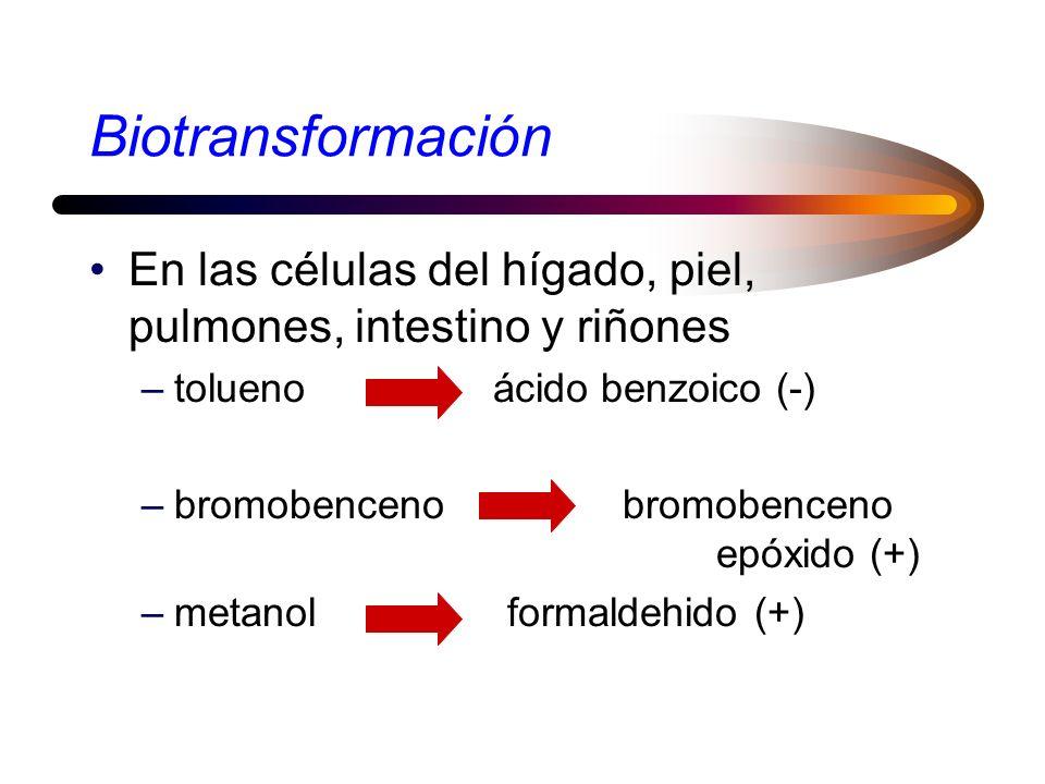 Acumulación Huesos: plomo, estroncio, fluor Grasa: DDT, PCBs –adelgazamiento