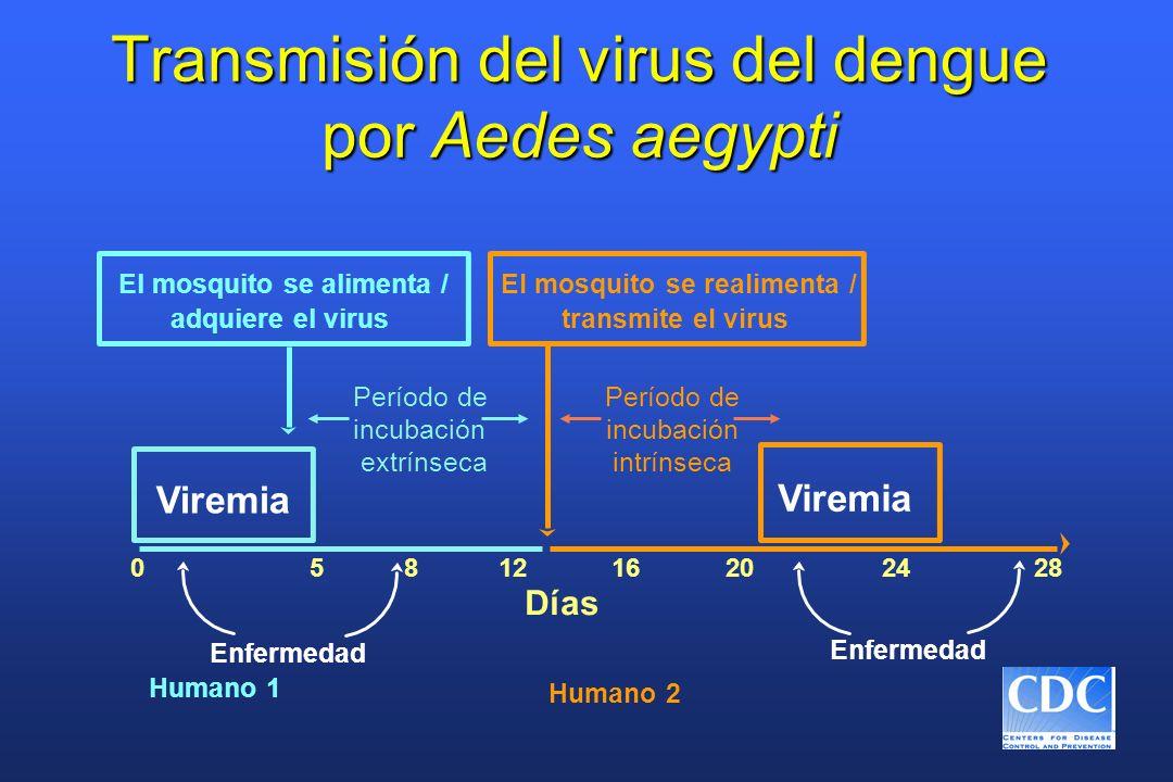 Replicación y transmisión del virus del dengue (Parte 1) 1.