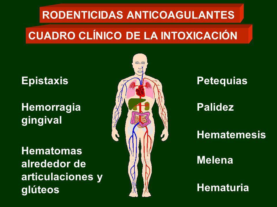 Epistaxis Hemorragia gingival Palidez Petequias Hematomas alrededor de articulaciones y glúteos CUADRO CLÍNICO DE LA INTOXICACIÓN RODENTICIDAS ANTICOA