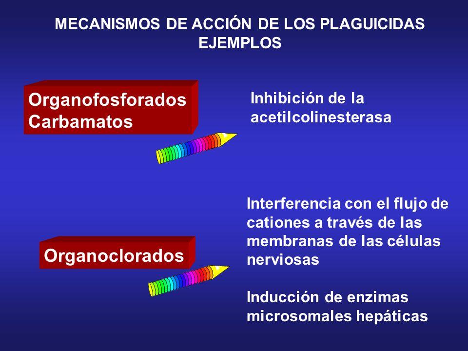 MECANISMOS DE ACCIÓN DE LOS PLAGUICIDAS EJEMPLOS Organofosforados Carbamatos Organoclorados Inhibición de la acetilcolinesterasa Interferencia con el