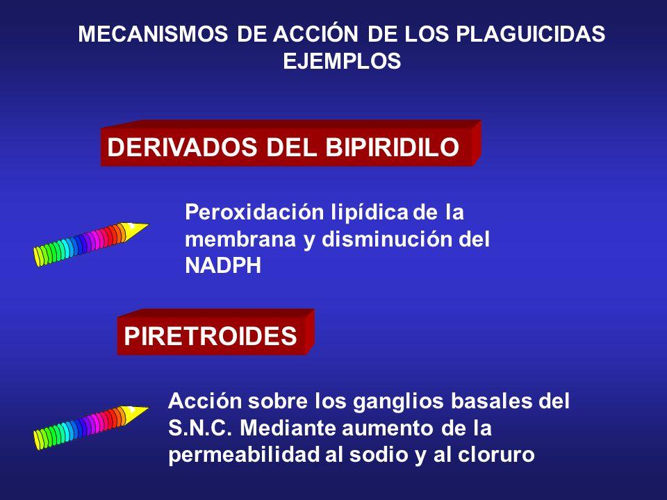 DERIVADOS DEL BIPIRIDILO PIRETROIDES Acción sobre los ganglios basales del S.N.C. Mediante aumento de la permeabilidad al sodio y al cloruro Peroxidac