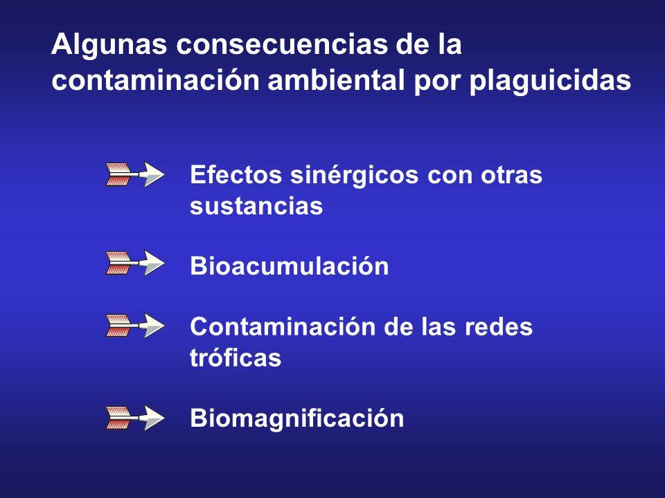 Efectos sinérgicos con otras sustancias Bioacumulación Contaminación de las redes tróficas Biomagnificación Algunas consecuencias de la contaminación