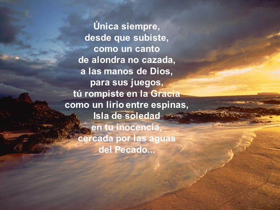 Única siempre, desde que subiste, como un canto de alondra no cazada, a las manos de Dios, para sus juegos, tú rompiste en la Gracia como un lirio entre espinas, Isla de soledad en tu inocencia, cercada por las aguas del Pecado...