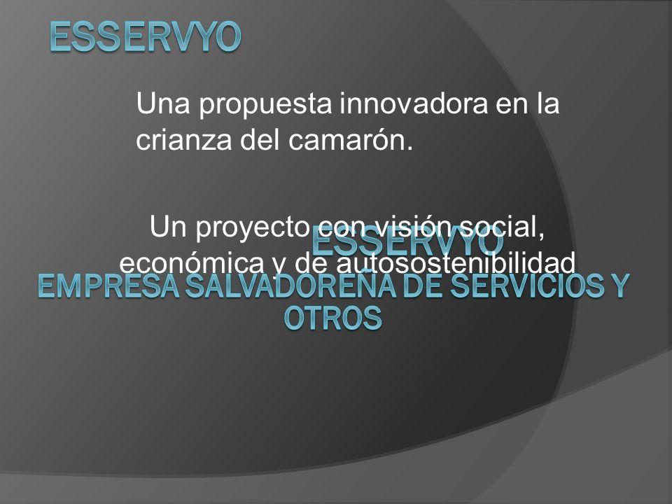 Un proyecto con visión social, económica y de autosostenibilidad Una propuesta innovadora en la crianza del camarón.