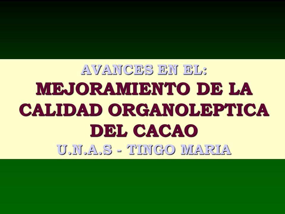 AVANCES EN EL: MEJORAMIENTO DE LA CALIDAD ORGANOLEPTICA DEL CACAO U.N.A.S - TINGO MARIA