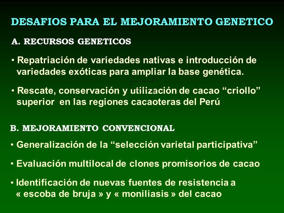 DESAFIOS PARA EL MEJORAMIENTO GENETICO A. RECURSOS GENETICOS B. MEJORAMIENTO CONVENCIONAL Repatriación de variedades nativas e introducción de varieda
